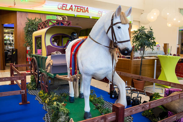 foto paard.jpg